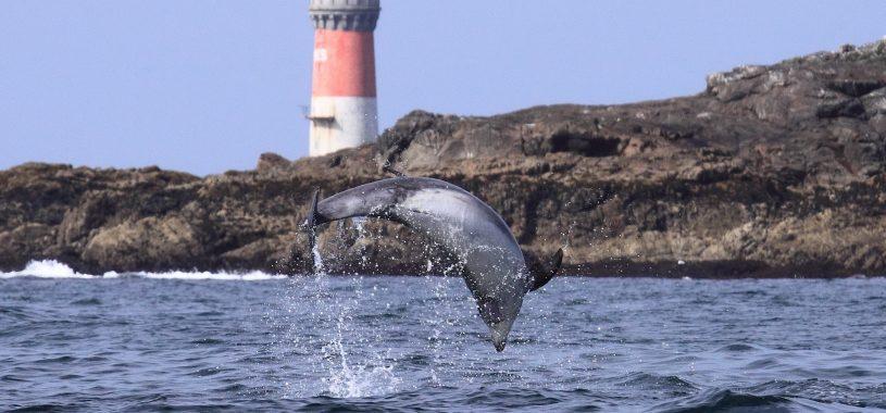 dauphin excursion mer Iroise